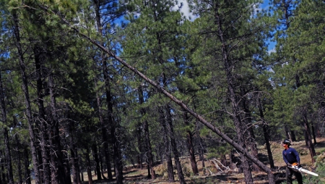 If a tree falls …