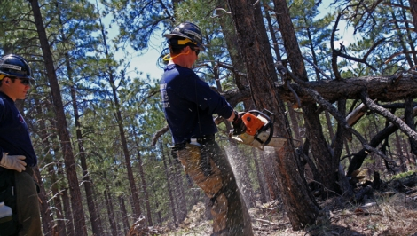 In Arizona's Coconino National Forest, wildfire crew boss Skyler Lofgren chops down a problematic pine.