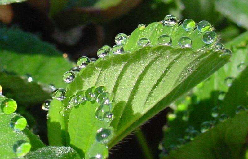 Plants Sweat And It S Beautiful