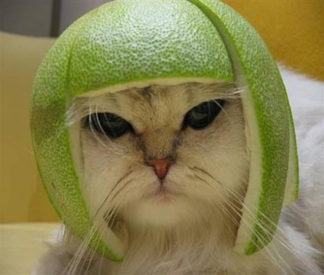 lime-cat