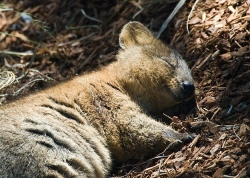 This utility series is Brought To You By The Quokka.