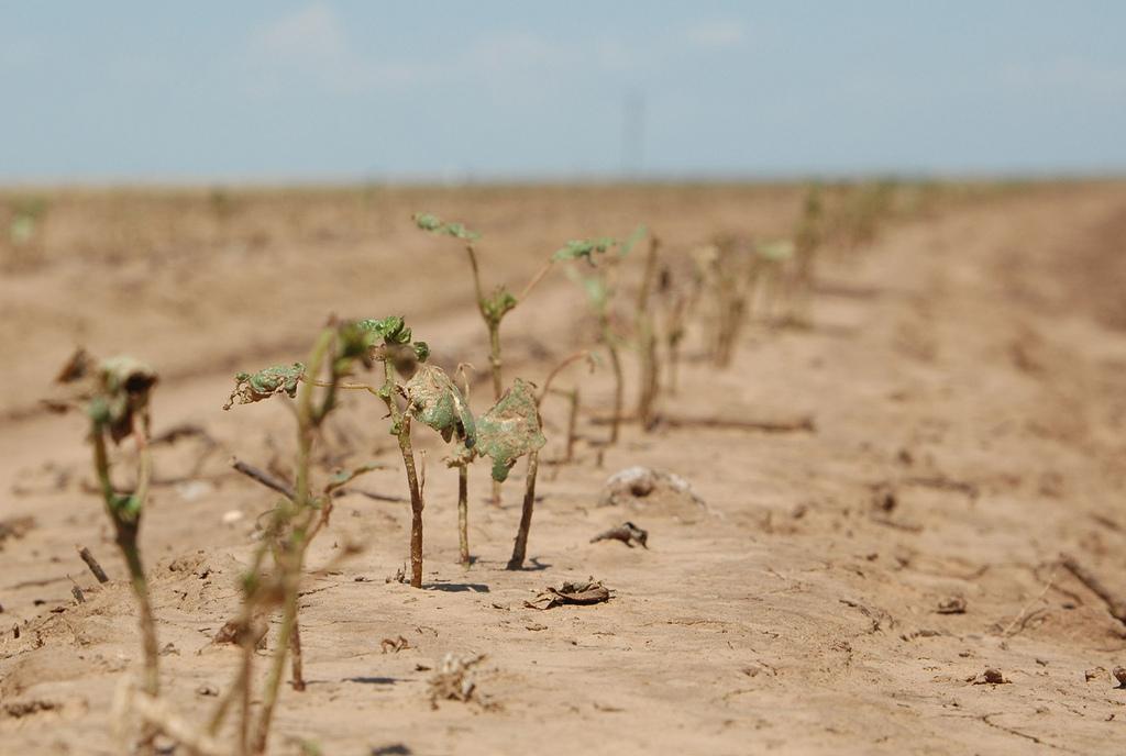 texas-farm-drought