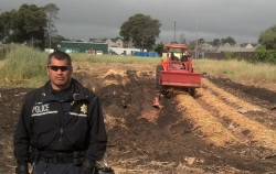 A tractor was used Monday to destroy the unauthorized farm plantation.