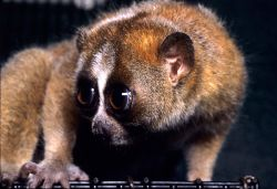 The slow loris will be your guide for part 4.