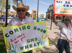 Monsanto protest GMO wheat