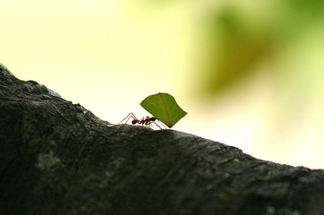 ant-at-work