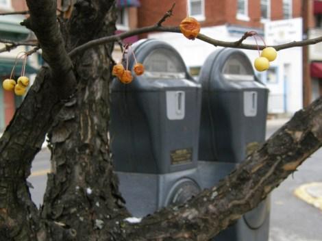 Cherries in the city