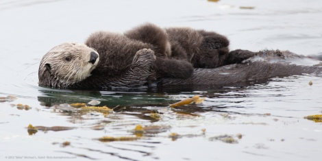 sea_otter_twins_3