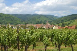 France's vineyards are safe from frackers.