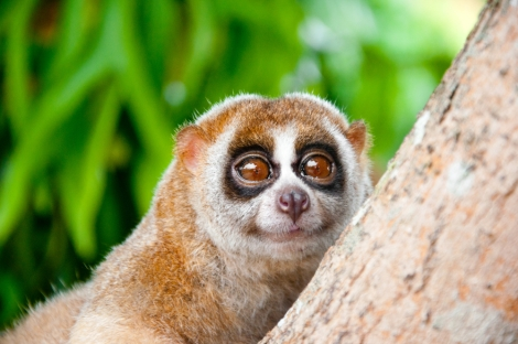 This slow loris can see the world of energy democracy, and yes, it's cool.