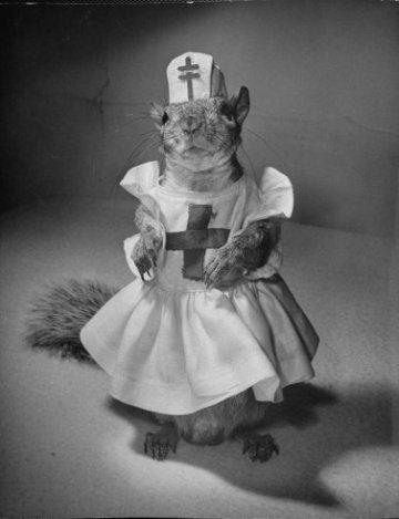 09squirrels