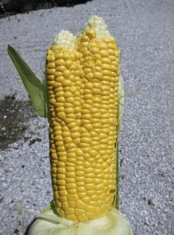 creepy-mutated-corn
