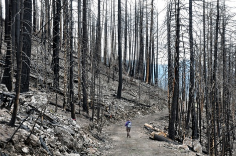 Valles Caldera, N.M., after the 2011 Las Conchas Fire.