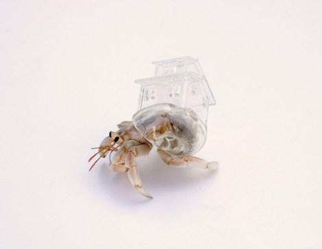 inomata_shell_house