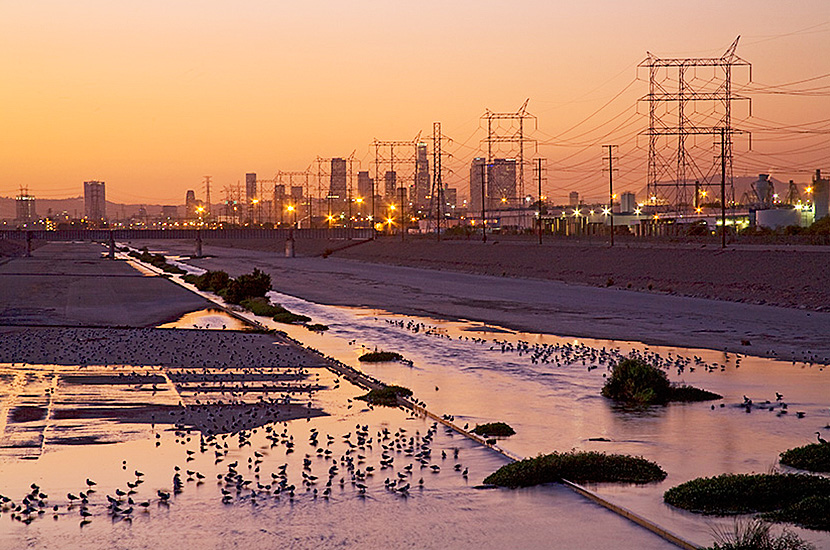 Waterfowl flock along a long concreted stretch of the LA river at sunset with the downtown skyline in the background.