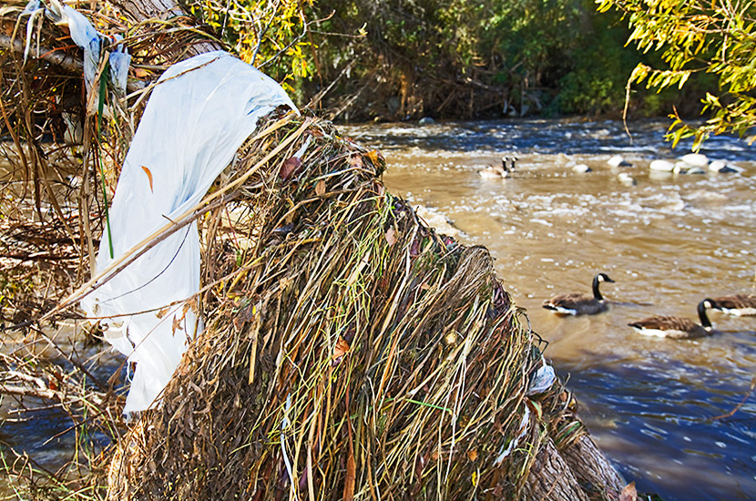 Each year tons of plastic bags and other trash get caught in trees and shrubs in the river after the heavy rains sweep out all the debris that has washed down from streets and accumulated in storm drains over the previous months.