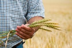 farmer holding wheat