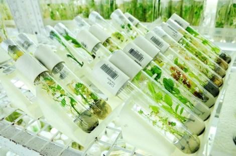 test_tube_plants