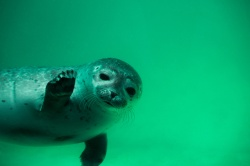 This post is not about seal levels, so I'm outta here.