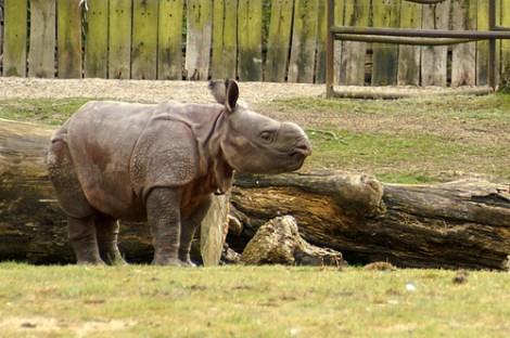 Baby rhinos: even weirder-looking than British royals.