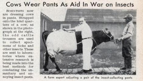 cow_pants