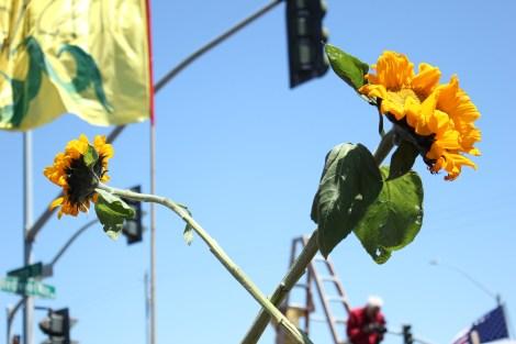 crossedflowers2