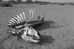 animal skeleton in the desert