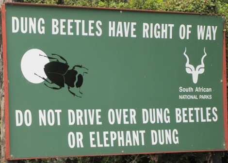 Dung beetles are doing it right.