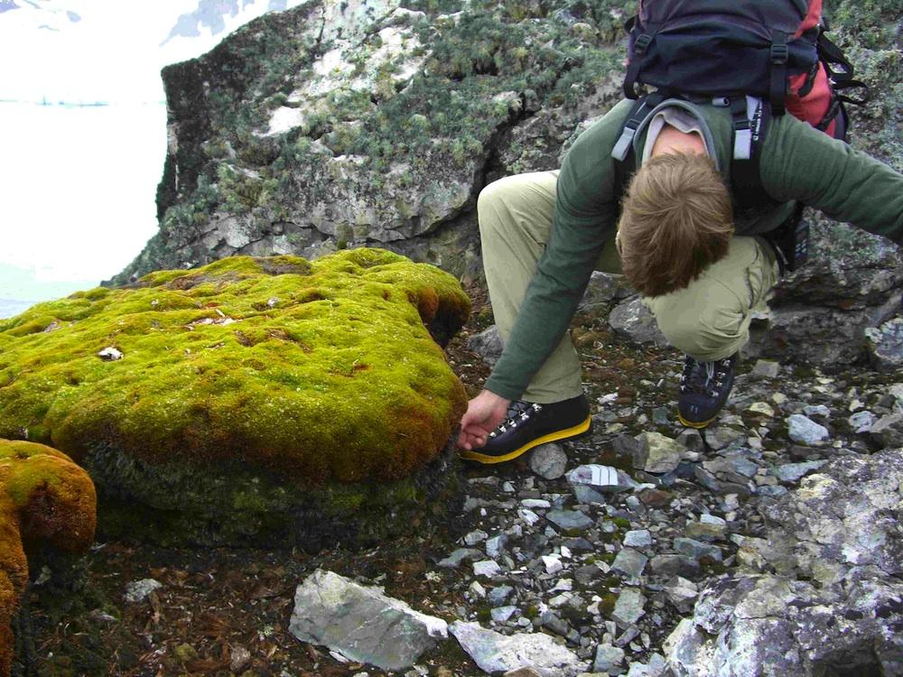 Antarctic Peninsula moss