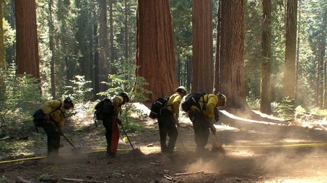 A National Park Service (NPS) fire crew builds a sprinkler system around a grove of sequoias.