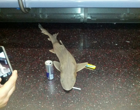 shark_subway