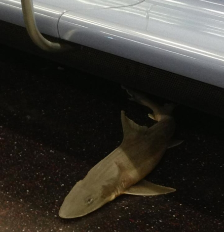 shark_subway_1