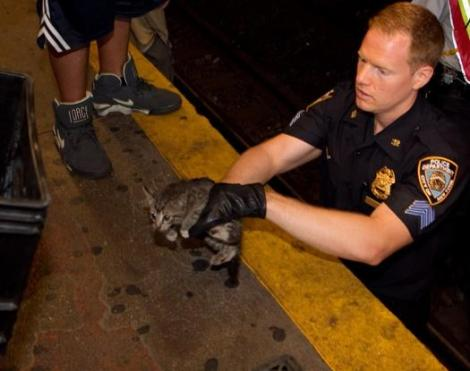 subway_kitten_rescued