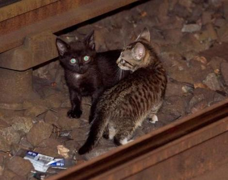 subway_kittens