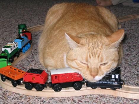 cat_train