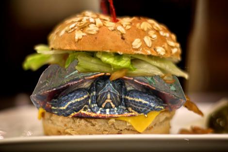turtle_burger
