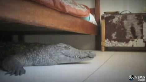 croc_bed