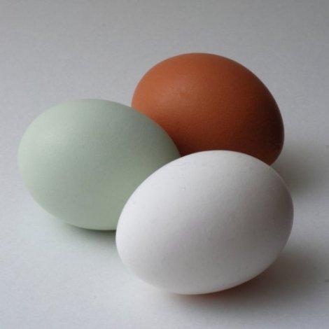 eggcolors