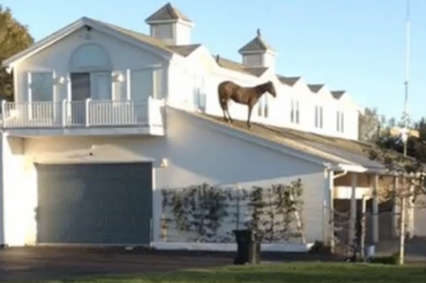 horse-on-roof