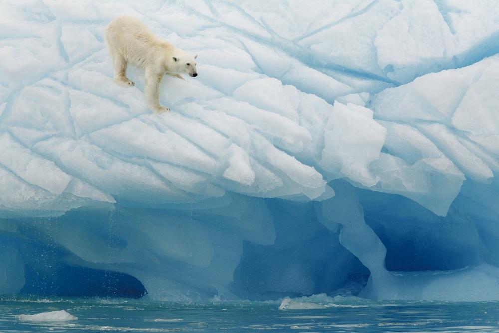 A polar bear on Arctic Ice