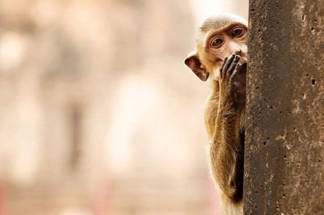 whisper_monkey