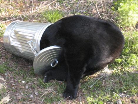 Noooot a good enough reason to shoot a bear.