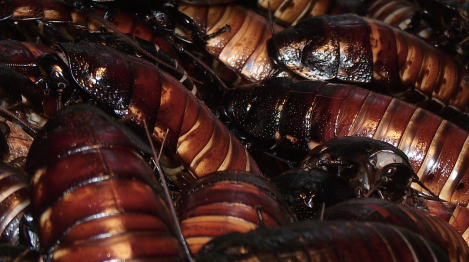 cockroaches-flickr