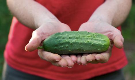 cucumber-cuke-chiots-run-flickr