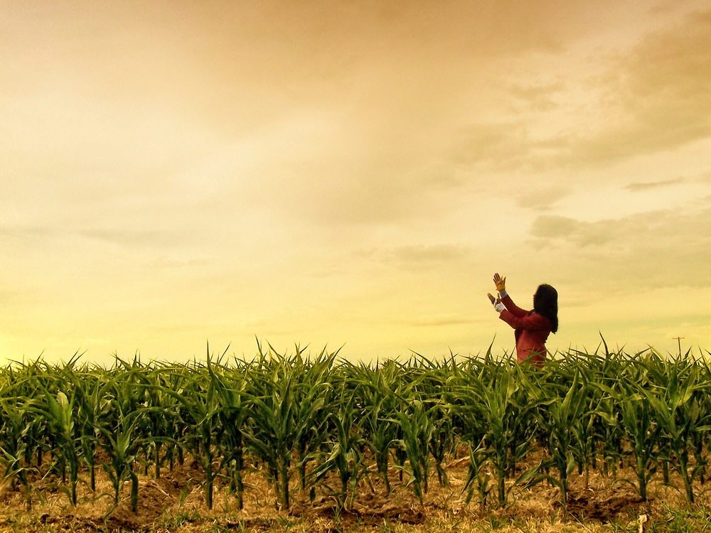 A Mexican cornfield.