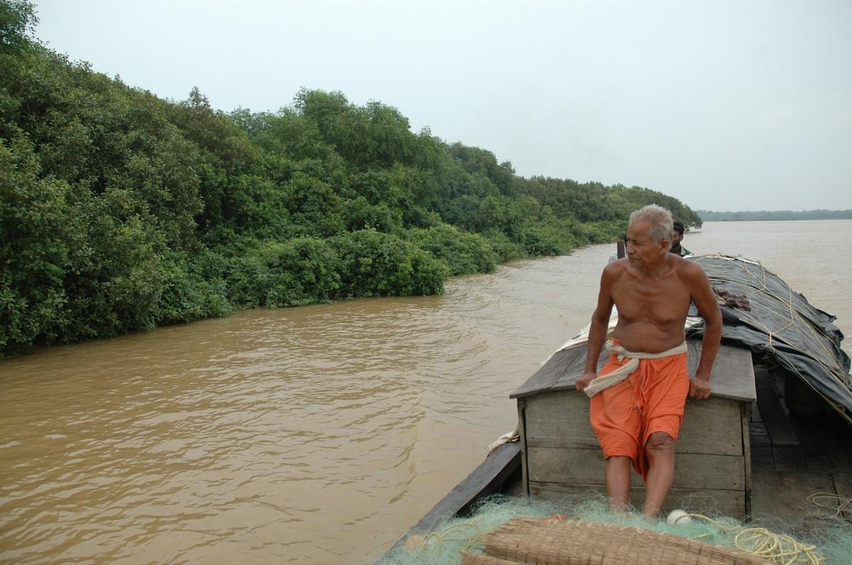 Indian mangrove