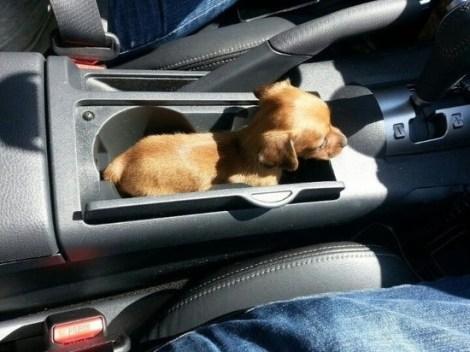 pup-holder-imgur