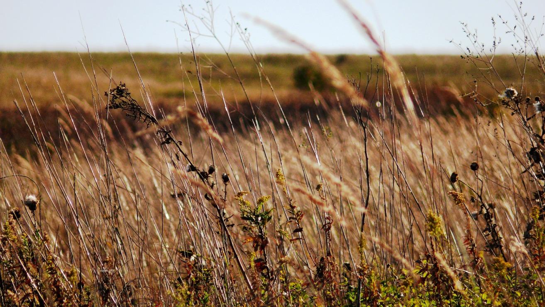 Grass blowing in Nebraska