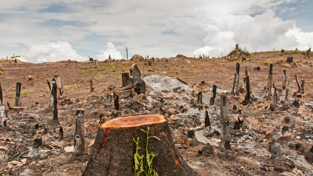 Deforestation in Thailand