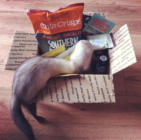 ferret-vegan-snack-box